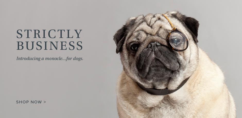 Strictly Business - Introducing a monocle... for dogs.